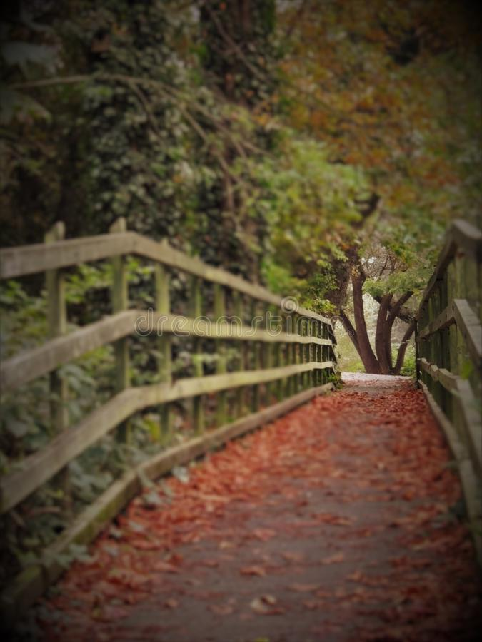 Woodland trail leading over a wooden bridge stock image
