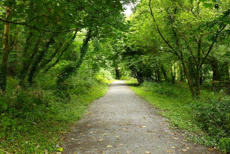 Woodland Path stock image