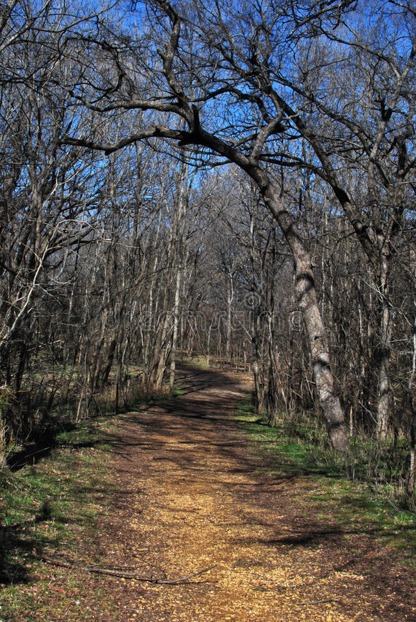 Woodland Path in Winter royalty free stock photography