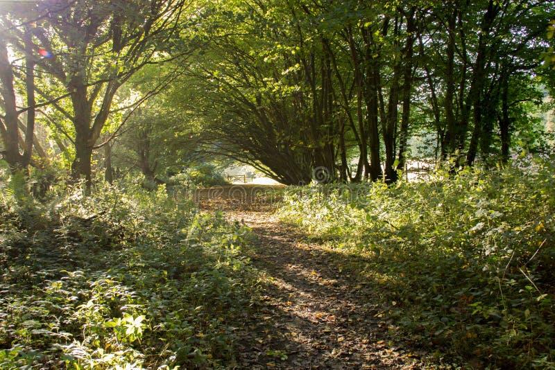 Woodland Pathway. Woodland archway in Llanforda woods on Oswalds Trail Oswestry Shropshire stock photos