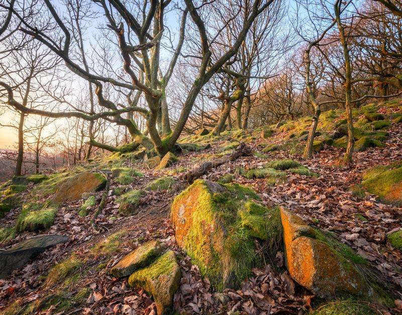 Woodland Peak district UK stock image