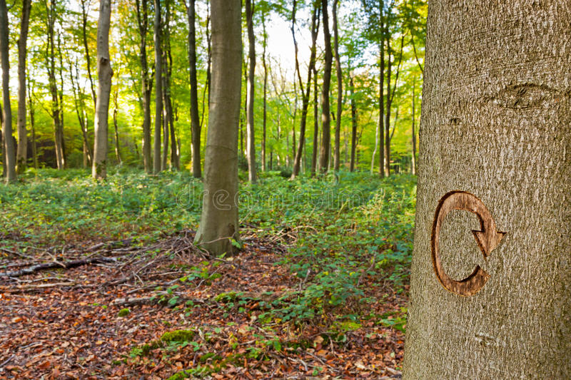 Woodland recycling. Woodland photo with a recycle symbol on a tree. This tree was marked to be cut down as part of a forestry clearing project royalty free stock photo