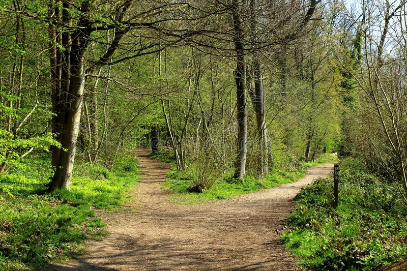 A woodland scene showing a footpath through the trees stock images