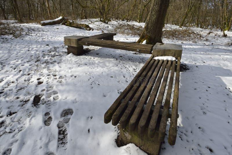 Woodland Seat in Snow. Charterhouse, Mendip Hills stock image