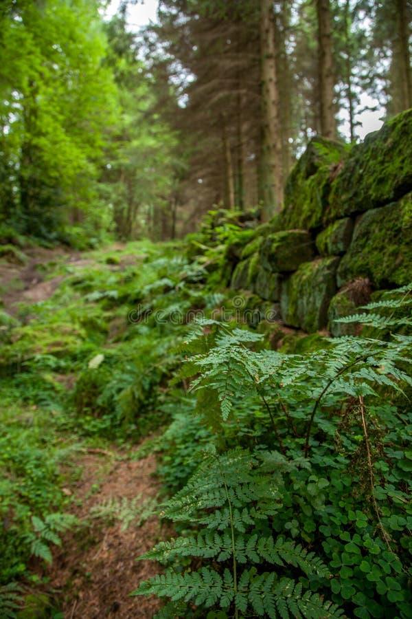 Woodland shrub royalty free stock photo