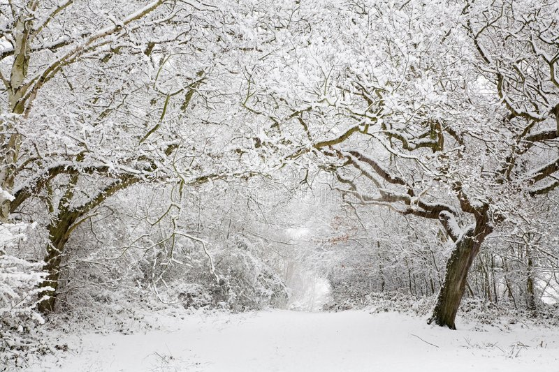 Woodland snow scene. Snow covered woodland scene with copy space royalty free stock image