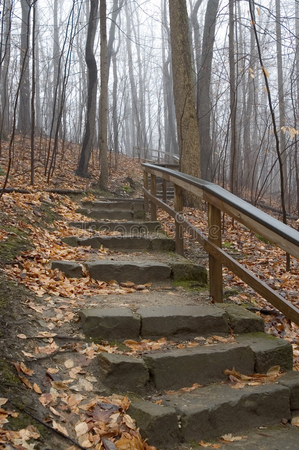 Woodland Stairs royalty free stock images