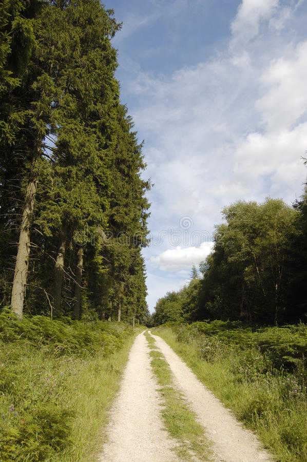 Woodland track vert. Woodland track in the Dalby Forest, North Yorkshire stock photos