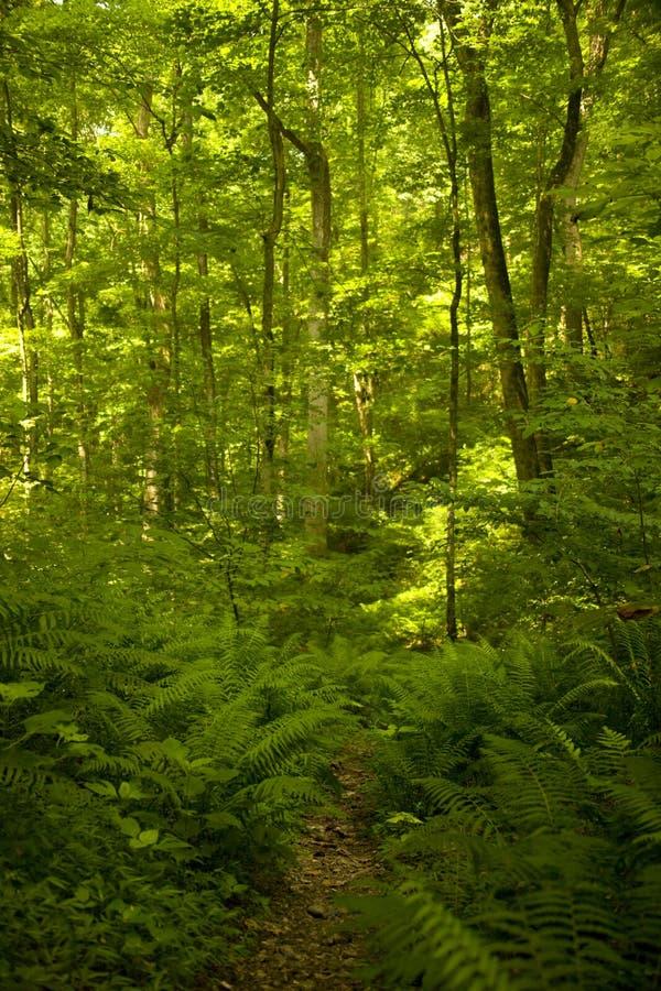 Free Woodland Trail Stock Photos - 12873243