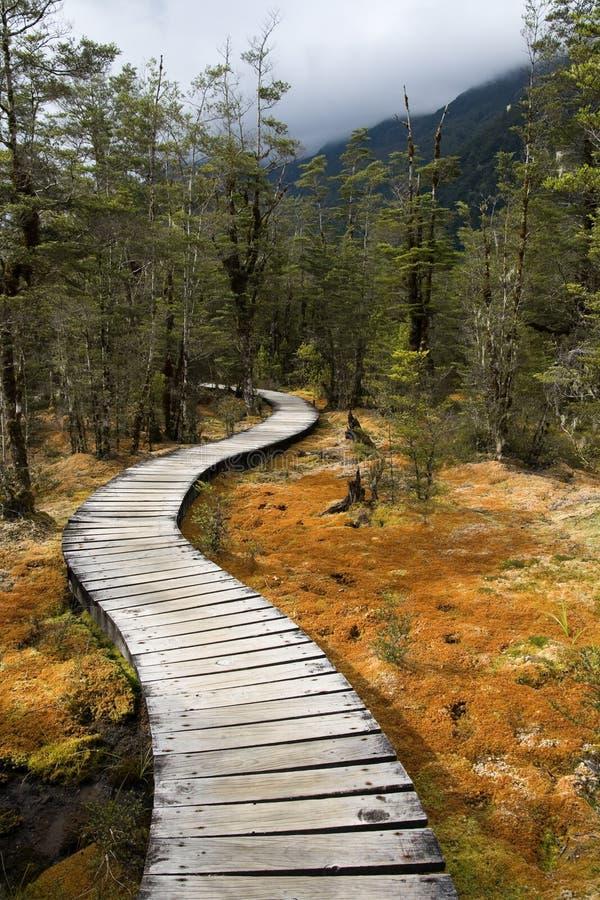 Free Woodland Trail Stock Photo - 17387220