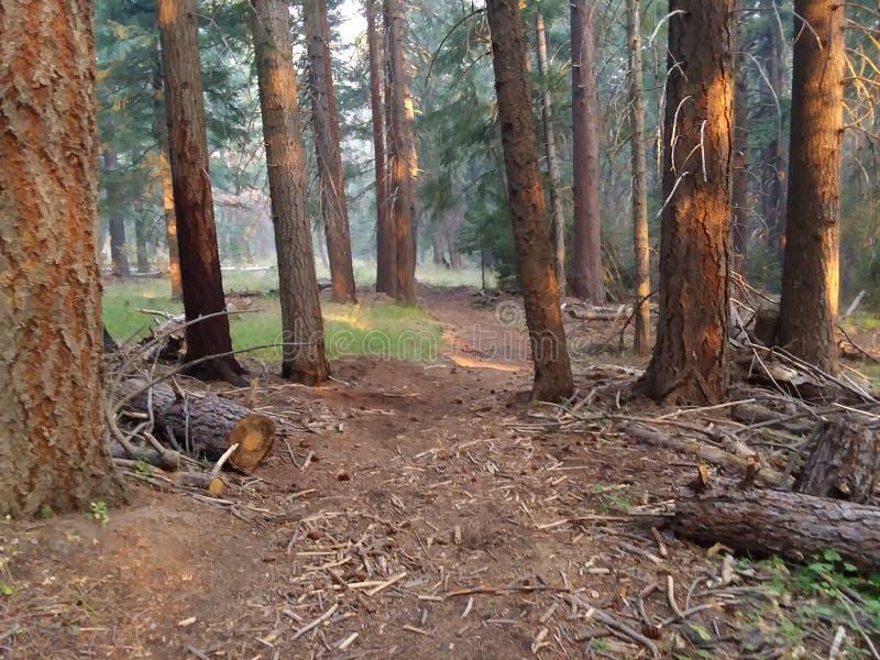 Woodland Trail Oregon arkivfoto