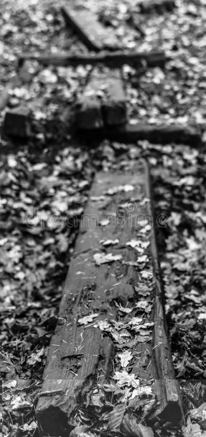 Woodland trail, wooden plank over boggy ground royalty free stock images