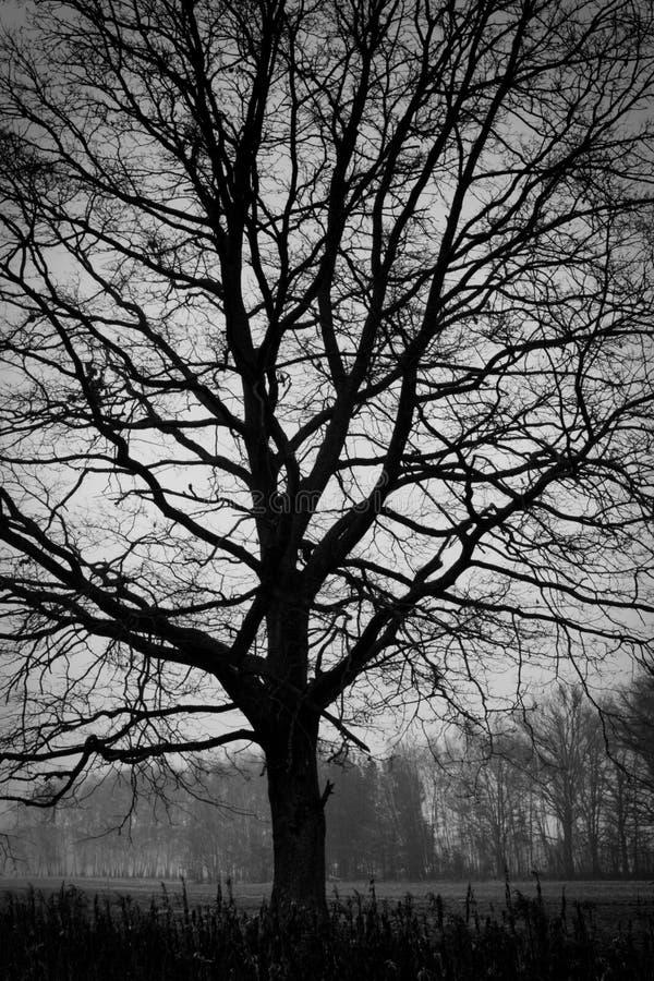 Download Woodland - Tree. B&W Photography Stock Image - Image: 10518711