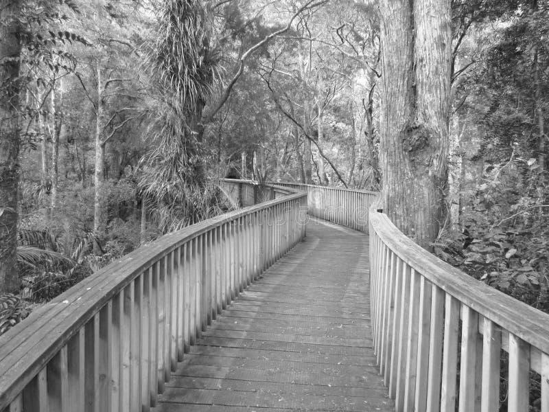 Woodland walkway stock photo