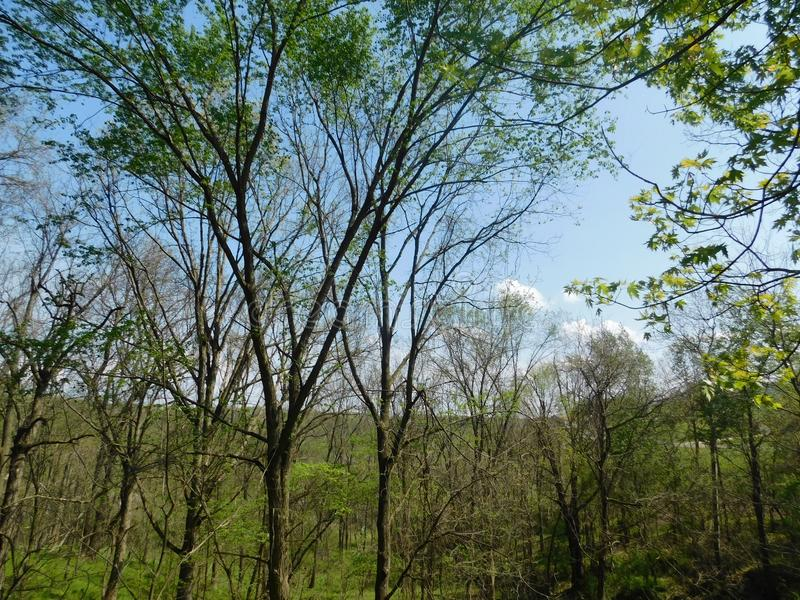 woodlands immagine stock