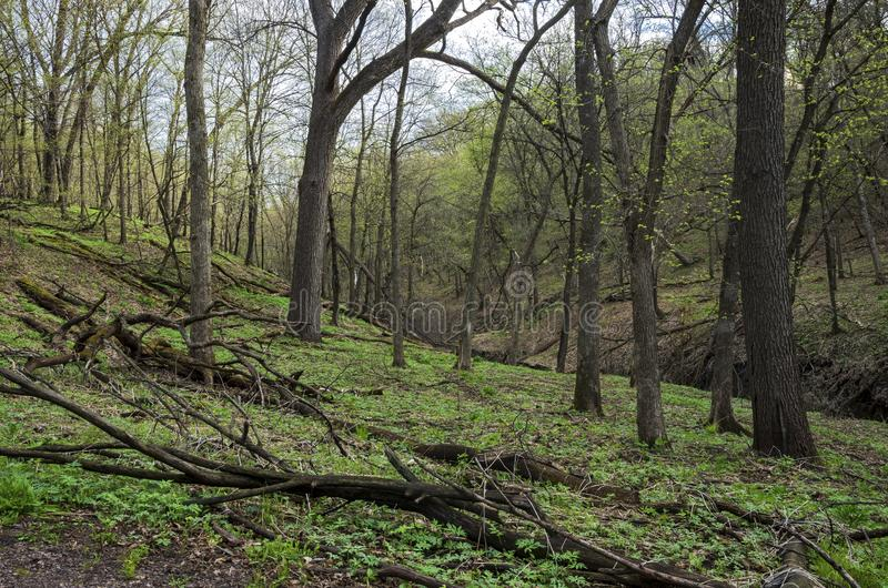 Woodlands Hills and Ravine of Flandrau State Park. In new ulm minnesota royalty free stock photo