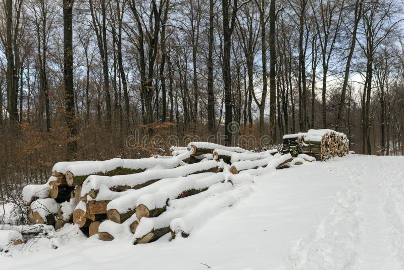 Woodlogs in het de winterbos royalty-vrije stock fotografie