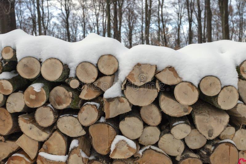 Woodlogs in het de winterbos royalty-vrije stock afbeeldingen