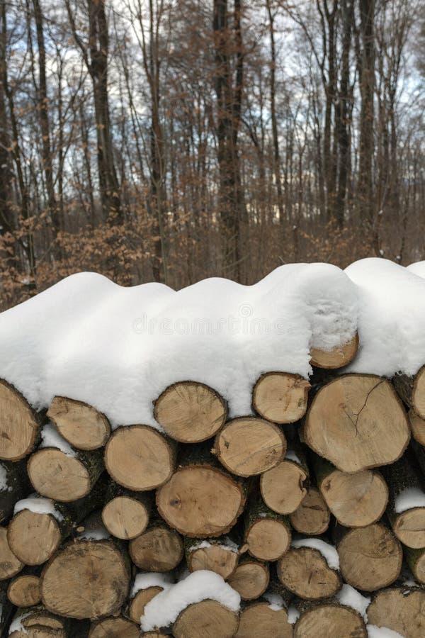 Woodlogs in het de winterbos royalty-vrije stock foto