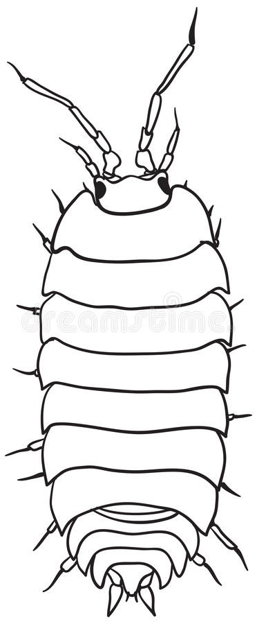 Woodlouse - monochrome vector drawing. Common woodlouse - a simple monochrome vector drawing vector illustration
