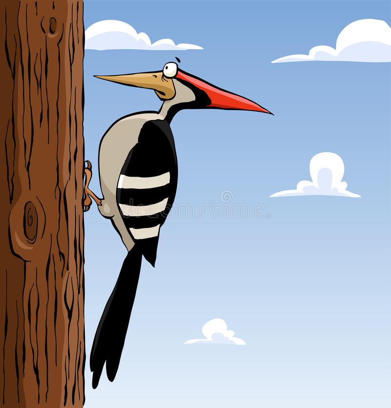 Woodpecker stock illustration