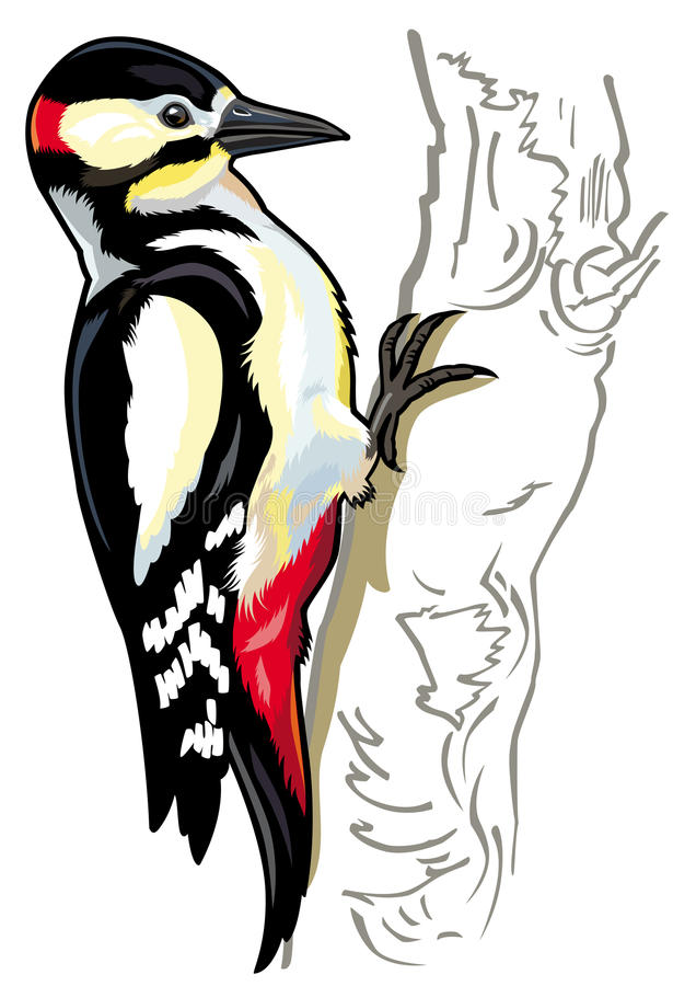 Woodpecker иллюстрация штока