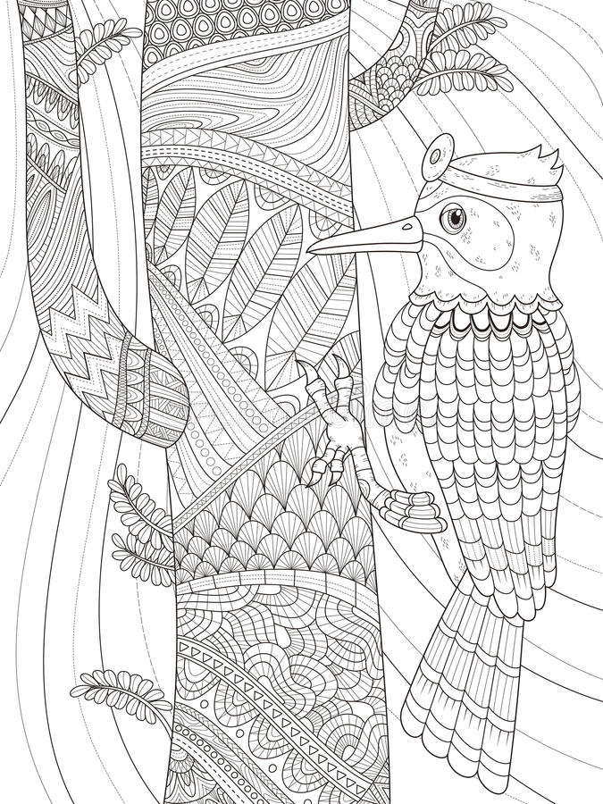 Download Woodpecker Adult Coloring Page Stock Illustration