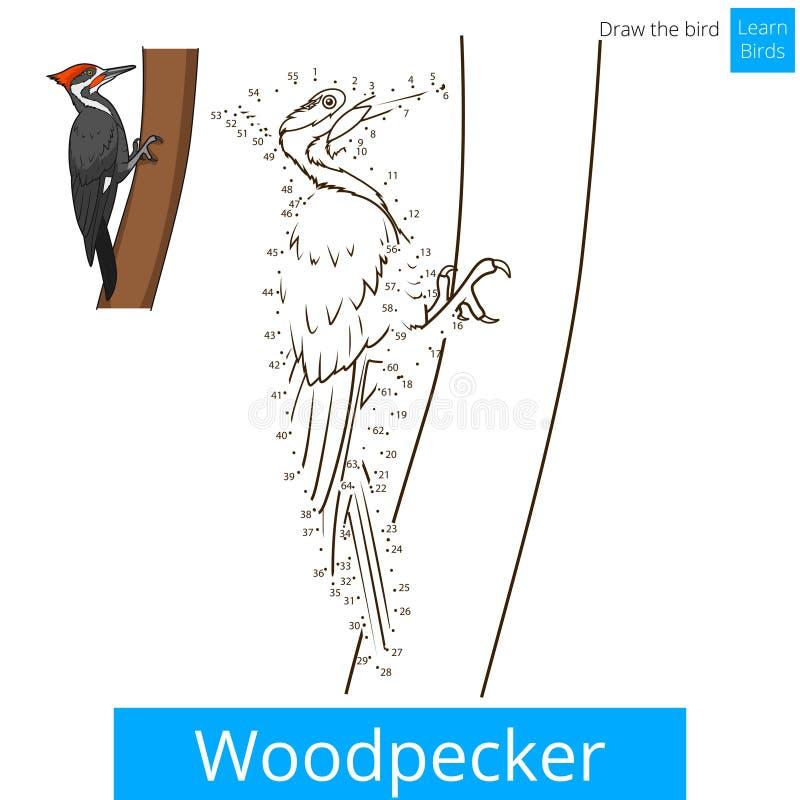 Woodpecker bird learn to draw vector vector illustration