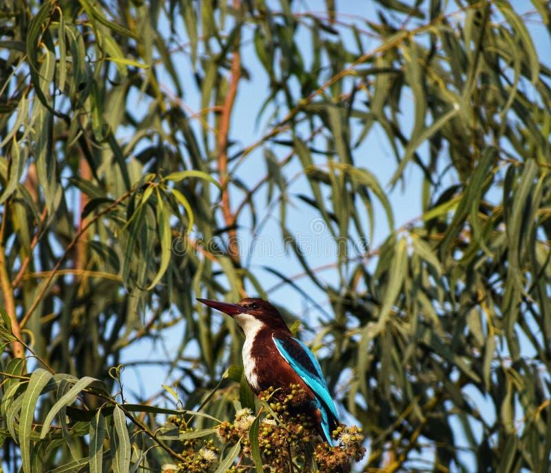Woodpecker stock photo