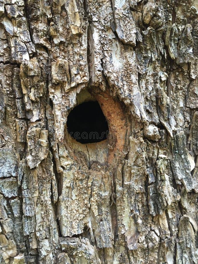 Woodpecker nest stock photography