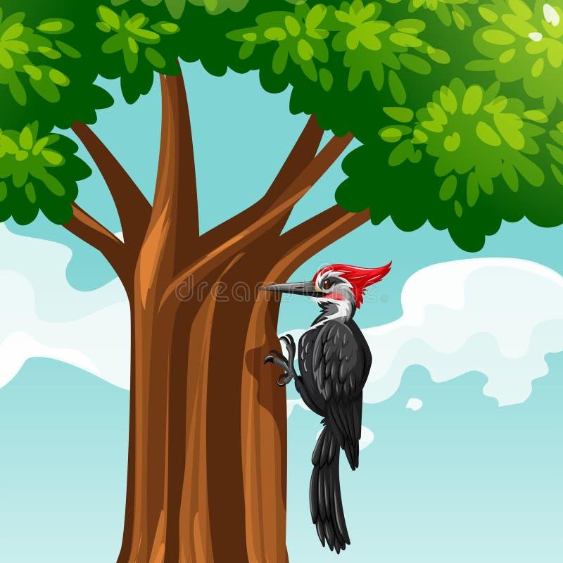 Woodpecker on the tree royalty free illustration