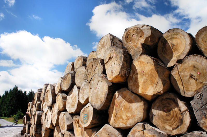 Woodpile на крае пути стоковая фотография rf