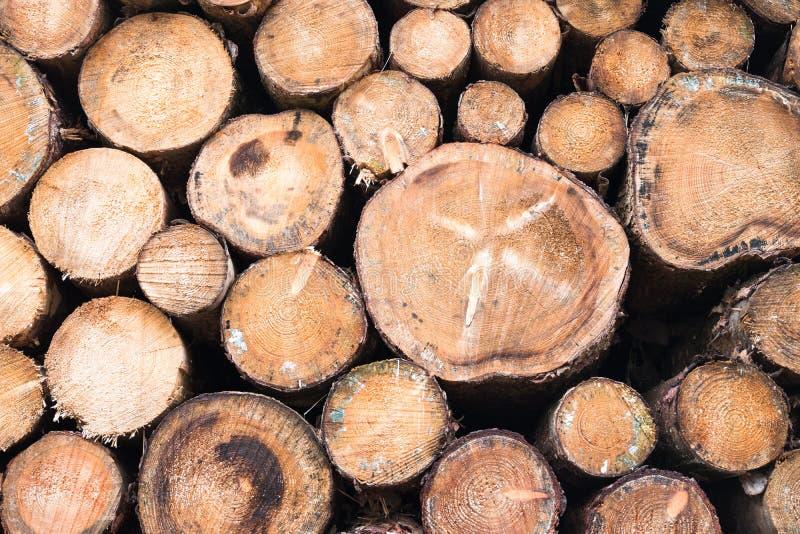 Woodpile в лесе стоковые фото