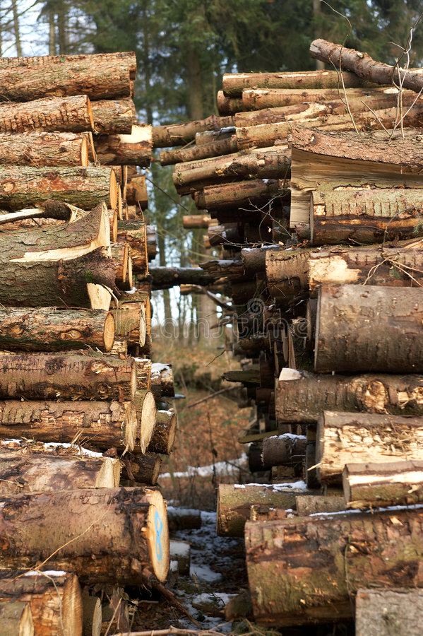 Woodpile stock foto