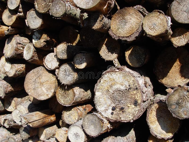 Woodpile Free Stock Photography