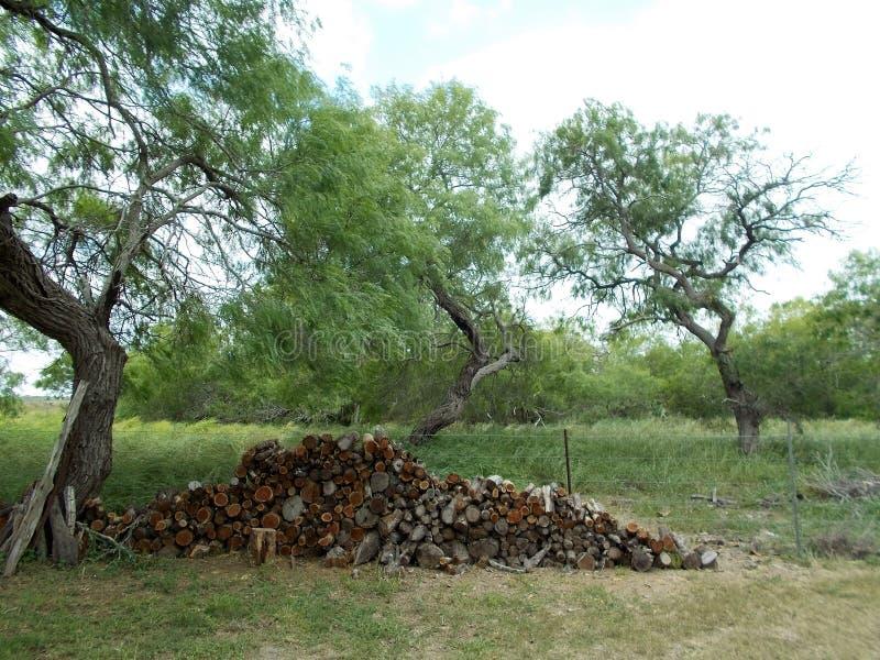 Woodpile do Mesquite pela cerca fotografia de stock