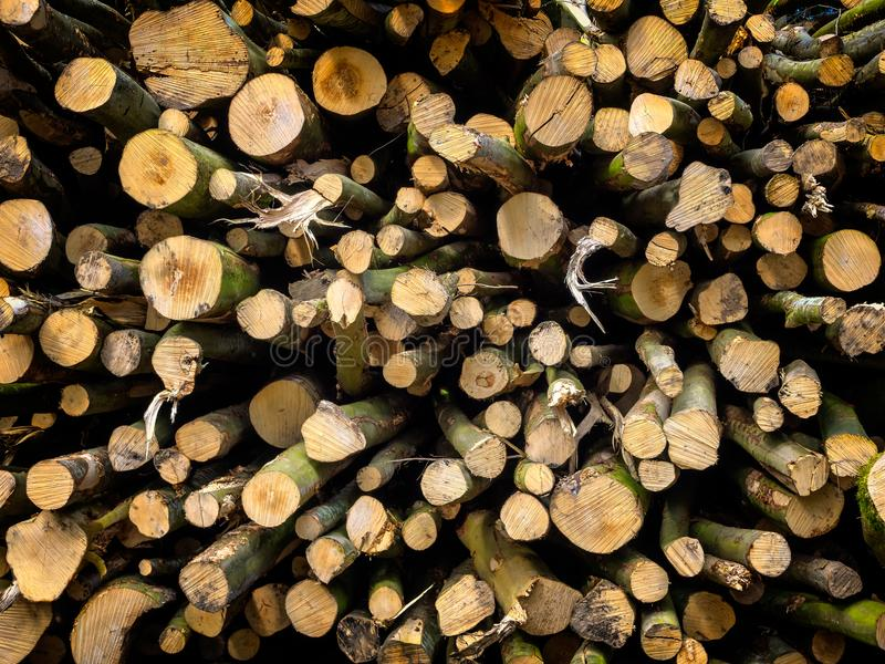 Woodpile eben gefallen lizenzfreie stockbilder