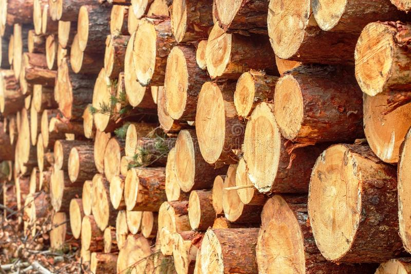 Woodpile of freshly chopped pine logs  in the forest stacked on top of each other. Selective focus stock images