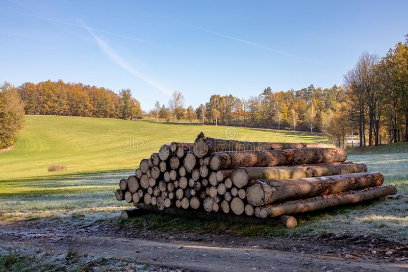 Woodpile of freshly harvested spruce logs. Trunks of trees cut and stacked in forest. Wooden Logs. Selective focus stock photo