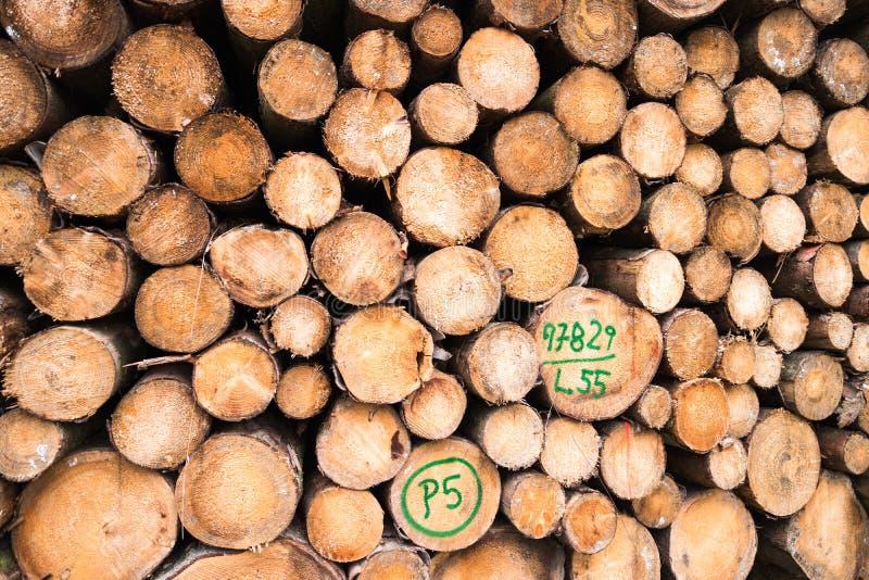 Woodpile na floresta imagem de stock royalty free