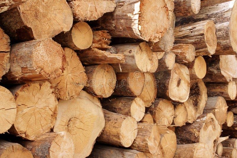 Woodpile van gesneden bomen in lumberyard royalty-vrije stock foto