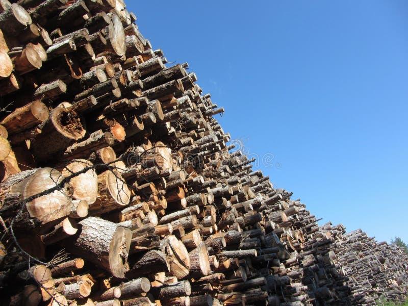 Woodpile van ronde logboeken tegen de blauwe hemel Gestapelde brandhoutstapel Gehakte houten boomstammen stock foto's