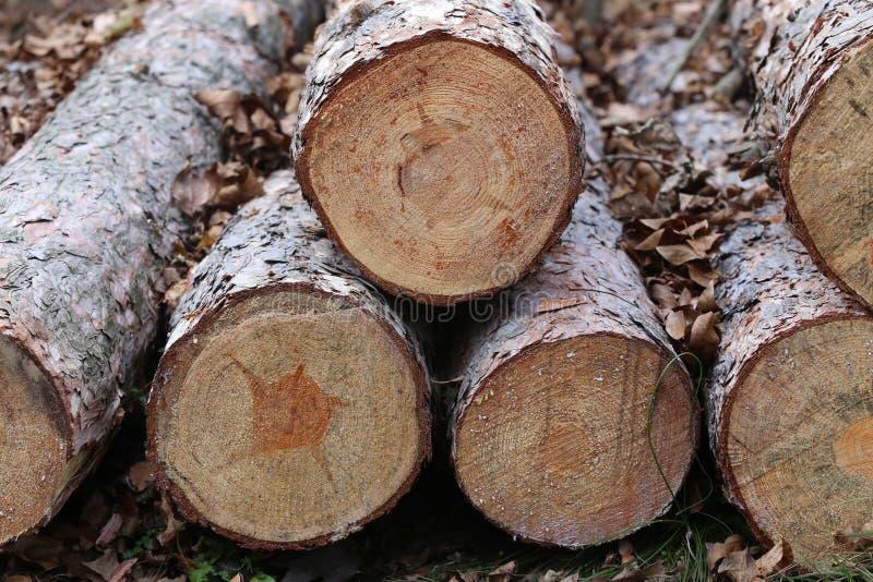 Woodpile van vers gesneden timmerhout die op distributie wachten royalty-vrije stock foto's