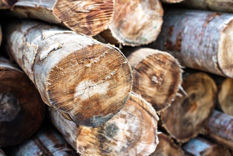 Woodpile zbliżenie  obraz stock