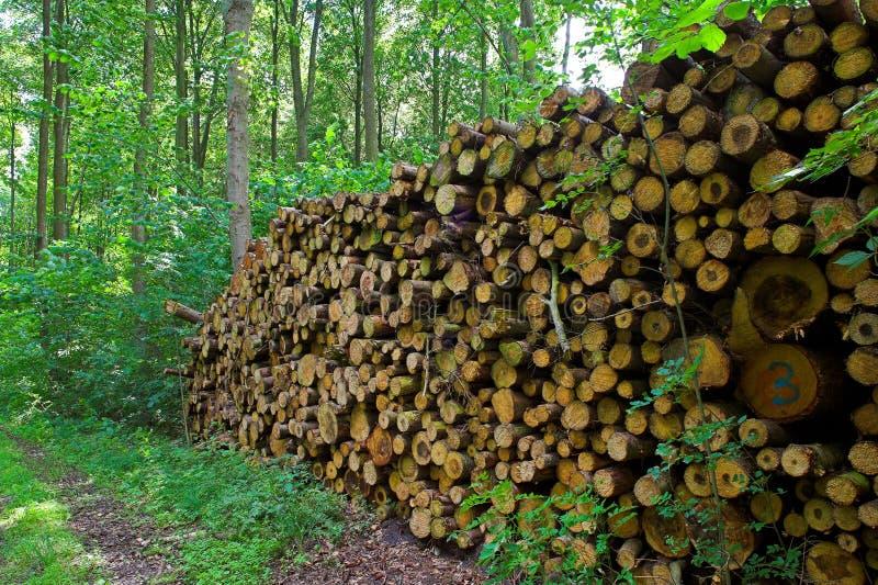 Woodpils royalty-vrije stock foto's