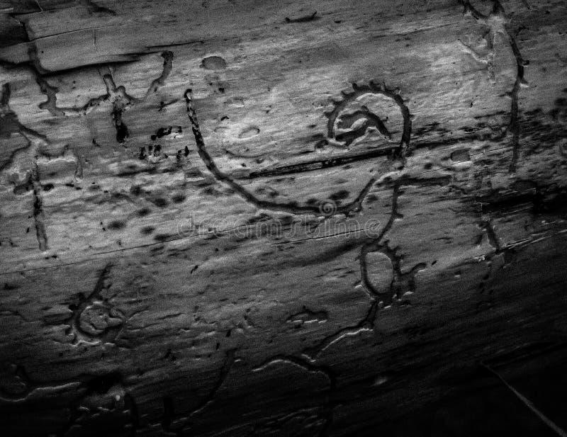 Woodroglyph 图库摄影