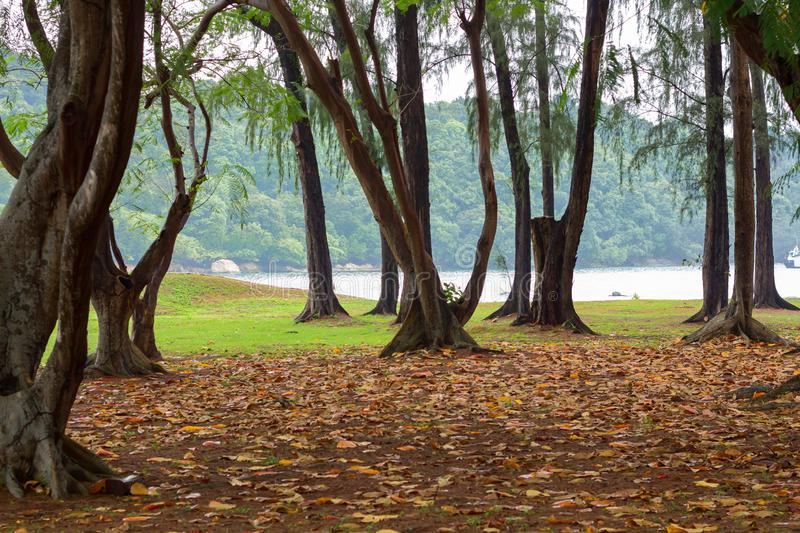 Forest floor having fallen leaves and dark mood of the jungle with sea in the background. royalty free stock photos