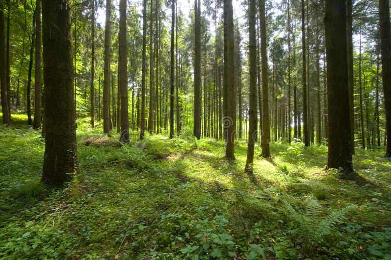 Woods stock photography