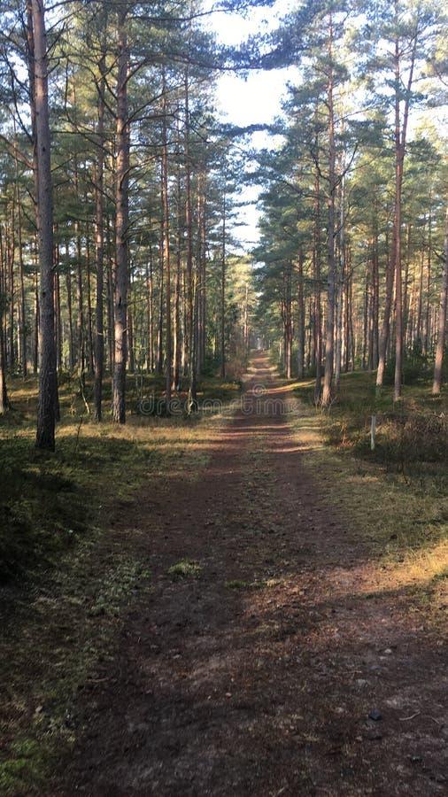 Woods royaltyfri bild
