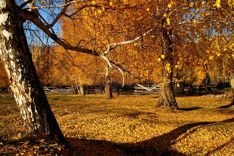 Woods in autumn stock photos